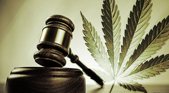 Wedge Gardens slams dagga ruling