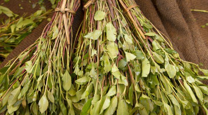 The dangers of khat addiction